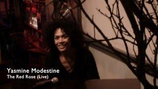 Yasmine Modestine - The Red Rose - Live